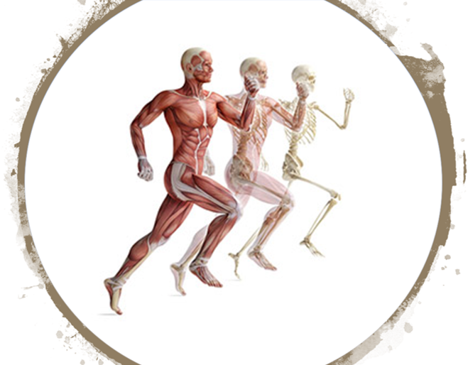 Musculoskeletal Growth & Regeneration Laboratory | Department of